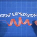 GeneExpression